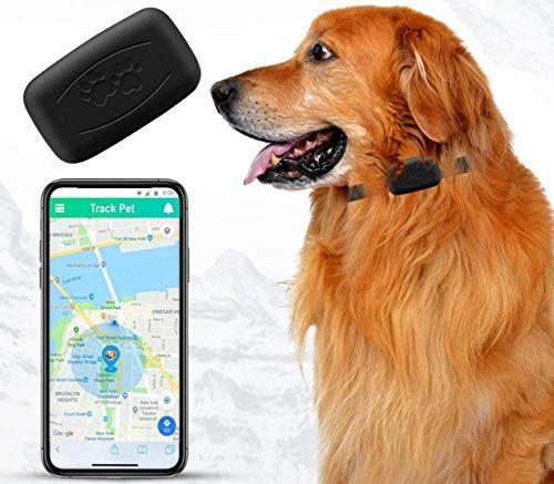 Rastreador GPS para perros, sin cuota mensual, aplicación gratuita, dispositivo de seguimiento en tiempo real, control de aplicación, collar de seguimiento de ubicación para perros, impermeable, pequeño, ligero (35 g), cobertura en todo el país