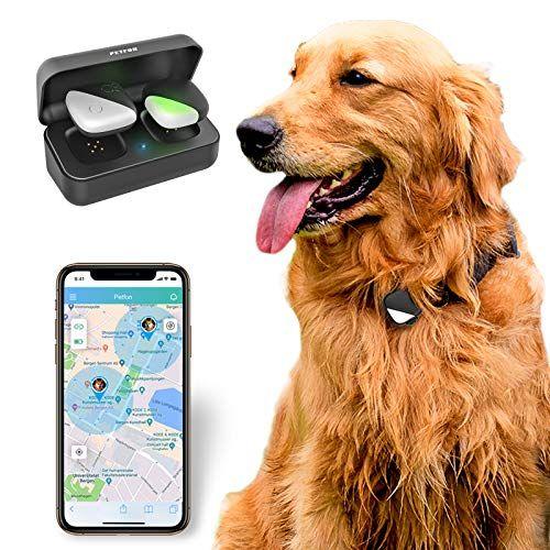 Rastreador GPS para mascotas, sin cuota mensual, dispositivo de seguimiento en tiempo real, control de aplicación para perros y mascotas (solo para perros)